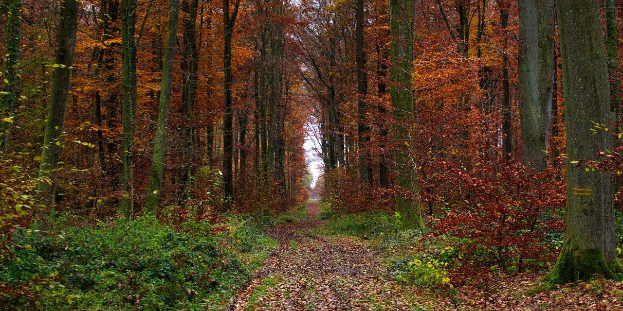 Foresterie : le Parlement européen fait feu de tout bois