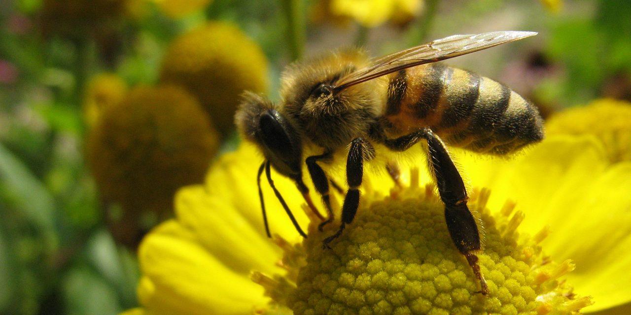 Lutter contre les insecticides, lutter contre les «écolos de la 25ème heure»