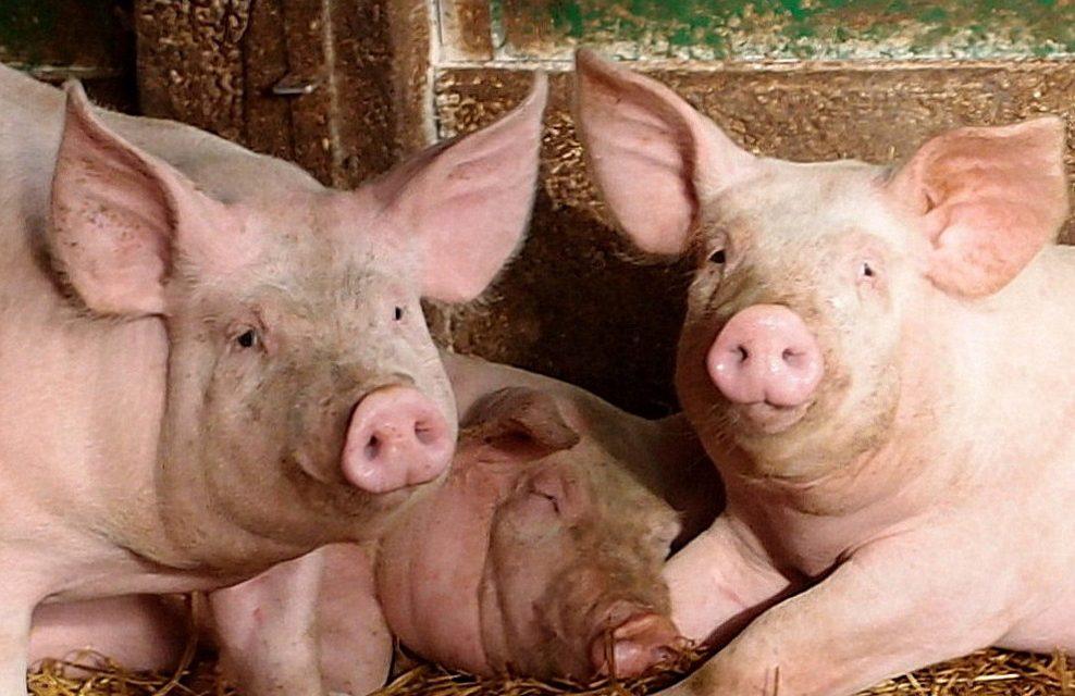 Salon de l'Agriculture : face aux oublieux et aux bonimenteurs, nos propositions