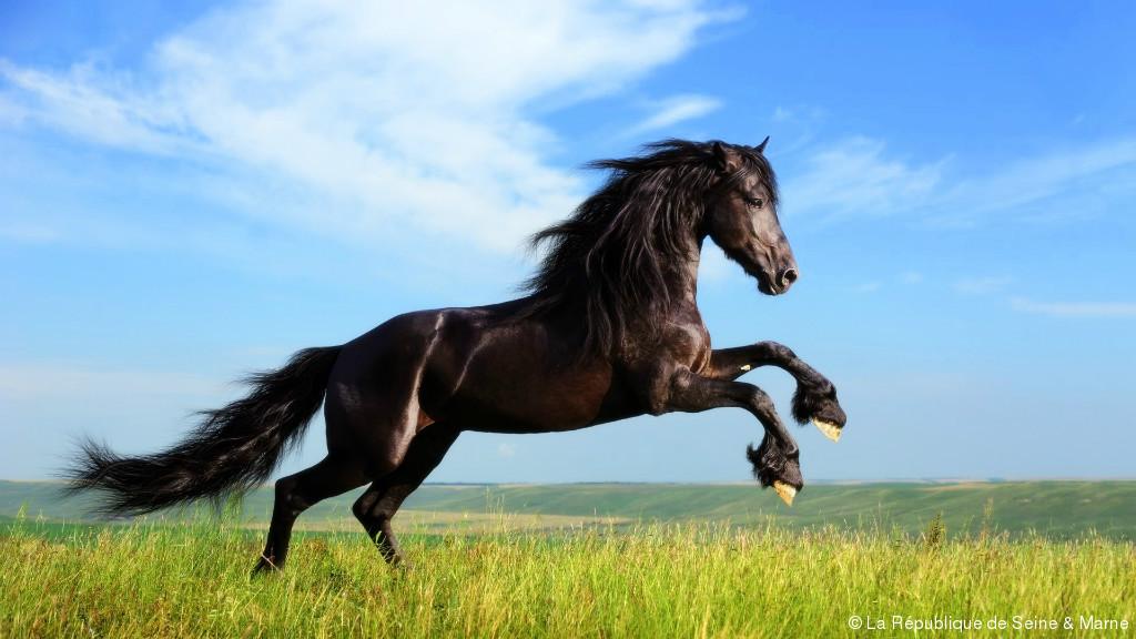 Le Parlement européen murmure à l'oreille des chevaux