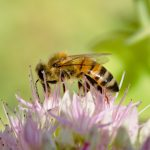 La vie sur terre a besoin des abeilles et des pollinisateurs !