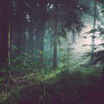 Le Parlement européen exige une législation contraignante pour mettre fin à la déforestation mondiale.